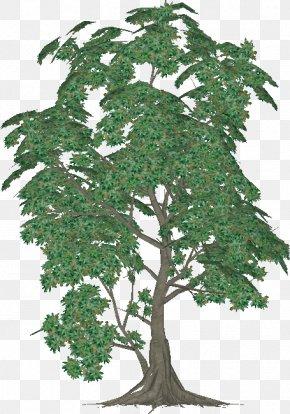 Bohemian Rhapsody - Chinese Sweet Plum Evergreen Plane Trees Leaf PNG