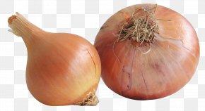 Onion - Yellow Onion Vegetable Shallot Food PNG