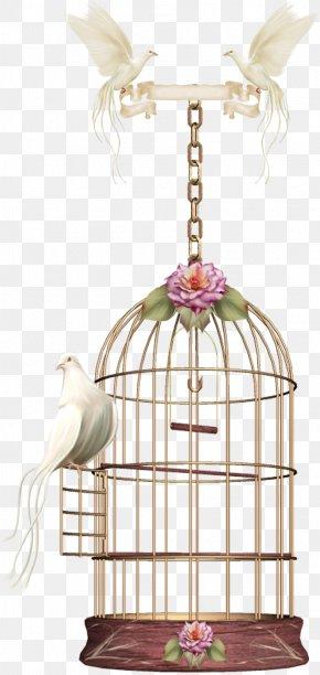 Birdcage - Birdcage Parrot PNG