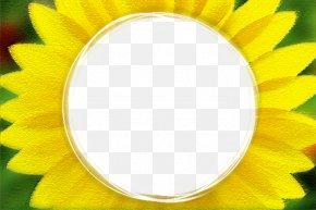 Sunflower Border - Common Sunflower PNG