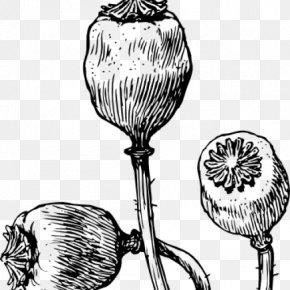 Poppy - Common Poppy Opium Poppy Remembrance Poppy Drawing PNG