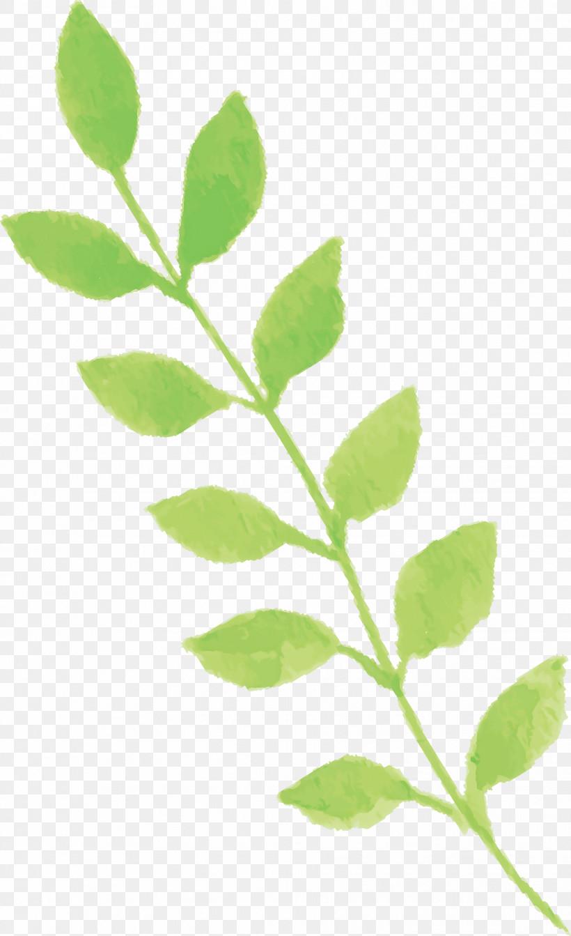 Leaf Plant Flower Tree Plant Stem, PNG, 1831x3000px, Watercolor Leaf, Branch, Flower, Leaf, Plant Download Free