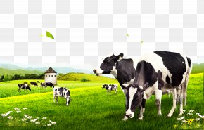 Cow Pasture - Dairy Cattle PNG