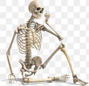 Human Skeleton Bone Density Human Body Vertebral Column PNG