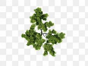 Tree Plan - Architecture Plan PNG