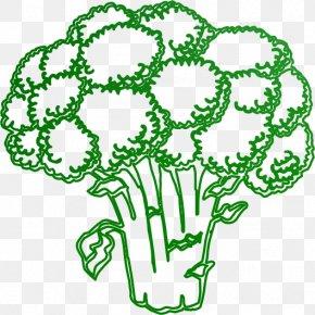 Vegetable - Vegetable Broccoli Education Fruit Pre-school PNG