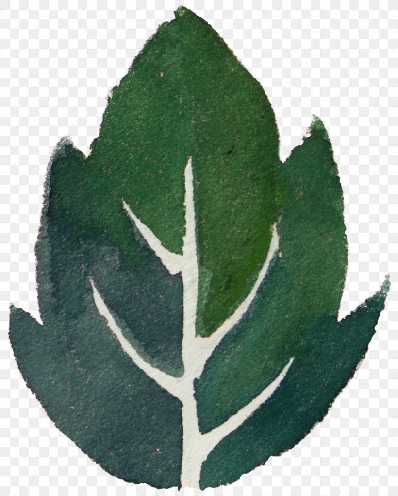 Leaf Watercolor Painting Green, PNG, 883x1100px, Leaf, Drawing, Element, Green, Herbaceous Plant Download Free
