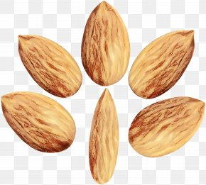 Apricot Kernel Nuts Seeds - Almond Plant Superfood Food Nut PNG