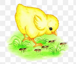 Chick And Ants - Ant Watercolor Painting Gratis PNG