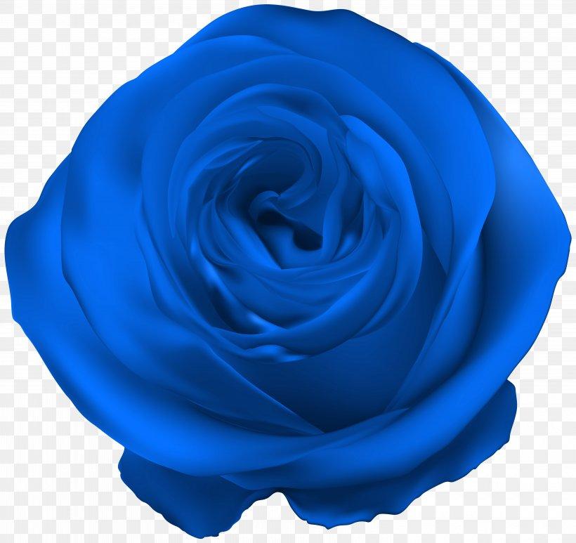 Blue Rose Royal Blue Png 6000x5663px Centifolia Roses