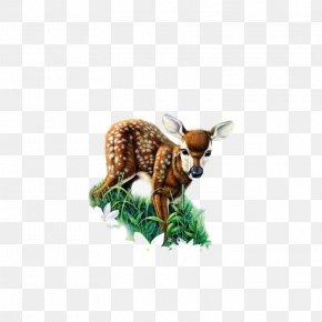 Deer - Red Deer Roe Deer Clip Art PNG
