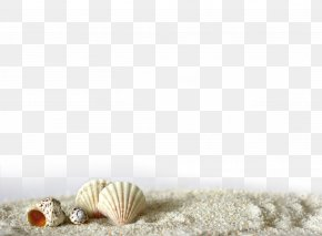 Shell Beach - Beach Of La Concha Seashell Sand Light PNG