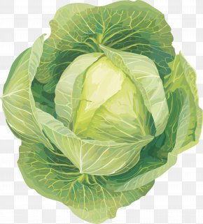 Cabbage Image - Cabbage Cauliflower Vegetable Kohlrabi Clip Art PNG