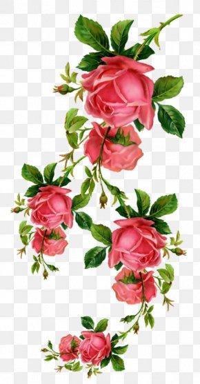 Birthday - Garden Roses Birthday Flower Floral Design Blume PNG