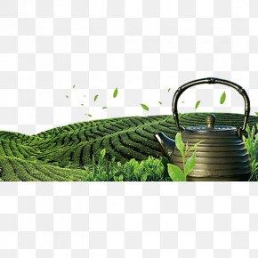 Green Tea Garden - Tea Garden Download PNG