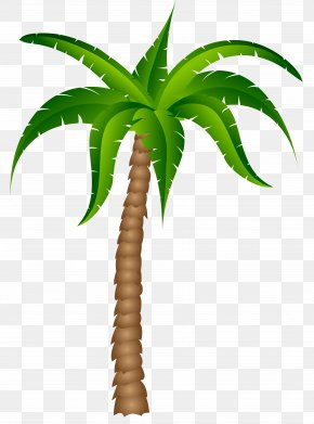 Palm Tree Transparent Picture - Palm Trees Clip Art PNG