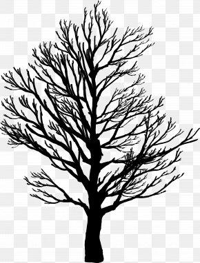 Coconut Tree - Tree Branch Clip Art PNG