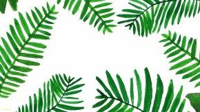 Palm Leaves - Desktop Wallpaper Palm Branch Leaf Arecaceae Desktop Computers PNG