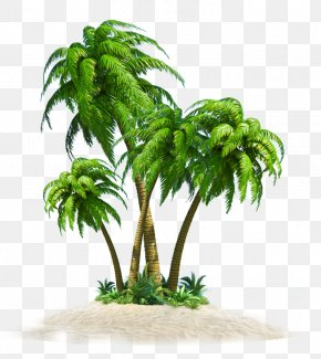 Coconut Tree - Coconut Tree Computer File PNG