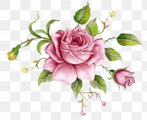 Pink Flowers Background Decoration 2 - Beach Rose Flower Blue Rose Painting Clip Art PNG