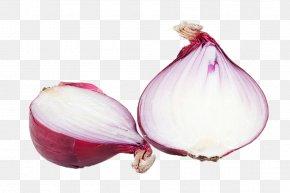 Onion - Red Onion Vegetable Food Allium Fistulosum PNG