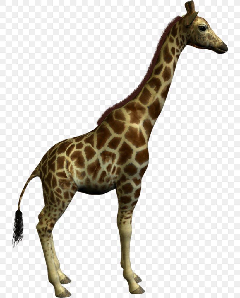 Giraffe Clip Art, PNG, 740x1017px, Giraffe, Autocad Dxf, Fauna, Giraffidae, Mammal Download Free