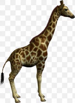 Giraffe - Giraffe Clip Art PNG