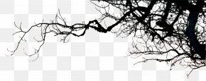 Branch Silhouette - Television Landscape Wallpaper PNG