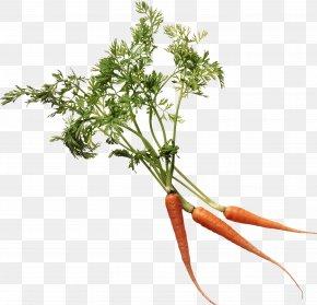Carrot Image - Carrot Leaf Vegetable Marrow-stem Kale Food Eating PNG