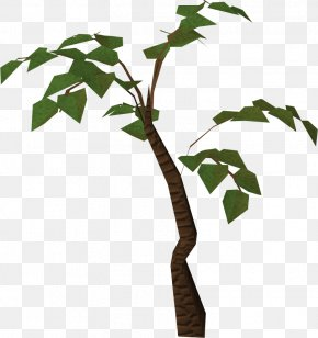 Jungle Tree HD - Tree Jungle Clip Art PNG