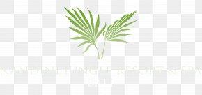 Plumeria Logo - Arecaceae Leaf Palm Branch Frond Plant Stem PNG