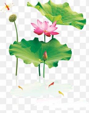Lotus Lotus Lotus - Nelumbo Nucifera Ink Wash Painting Download PNG