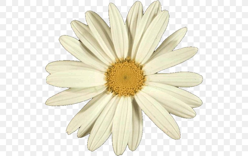 Flowers Background, PNG, 523x516px, Golden Ratio, African Daisy, Aster, Asterales, Barberton Daisy Download Free