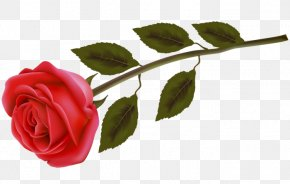 Rose - Rose Flower Stock Photography Clip Art PNG