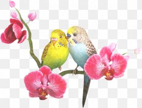 May Month - Parrots Of New Guinea Bird Clip Art PNG