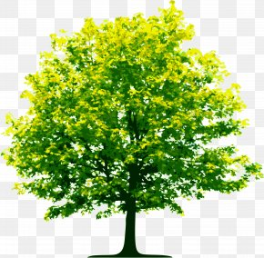 Tree Image, Free Download, Picture - Tree Computer File PNG