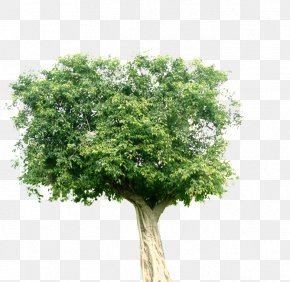 Green Tree - Landscape Tree Plant Computer File PNG