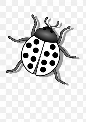Black Ladybug Cliparts - Beetle Ladybird Clip Art PNG