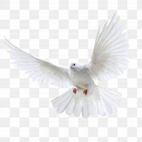 White Flying Pigeon Image - Columbidae Domestic Pigeon Wedding PNG