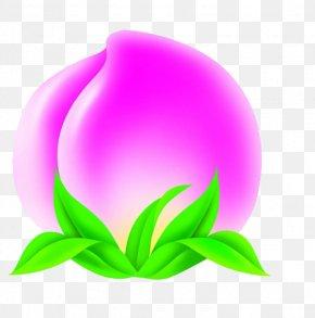 Peach - Longevity Peach Data PNG