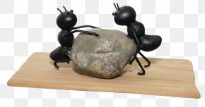 Ant Teamwork - Ant PNG