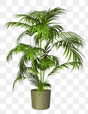 Potted - Flowerpot Houseplant PNG