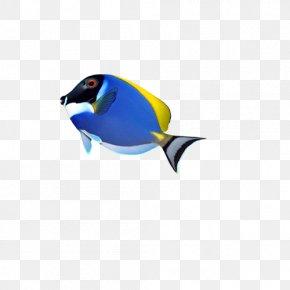 Fish - Fish Computer File PNG