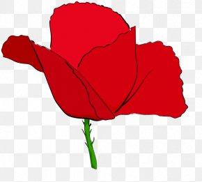 Red Poppies - Remembrance Poppy Common Poppy Clip Art PNG