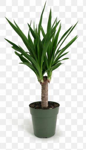 Perennial Plant Palm Tree - Cartoon Palm Tree PNG