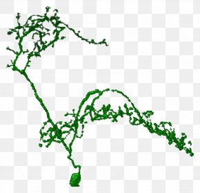Plant Segmentation Line - Leaf Green Plant Stem Line Clip Art PNG
