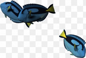 3d Cartoon Fish,Cartoon Fish - Fish Cartoon 3D Computer Graphics PNG