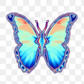 Butterfly - Butterfly Insect Iridescence Moth PNG