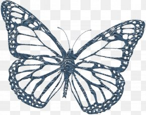 Butterfly - Monarch Butterfly Coloring Book PNG
