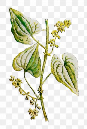 Leaf Twig Plant Stem Plants Flowering Plant PNG